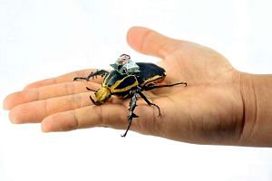 Netizens are showing disapproval over NTU's project involving remote-controlled 'cyber-beetles', with some calling it animal torture.