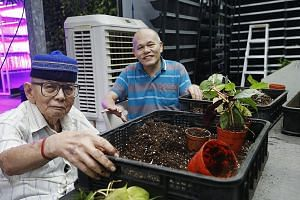 From far left: Apex Harmony Lodge residents Alwi Sulaiman, 87, and Lian Sing Huang, 65, spend two hours, twice a week, at Greenology. There, they place young plants in new pots and clean decorative moss.