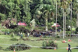 A 40m-tall Tembusu tree fell at the Singapore Botanic Gardens on Saturday (Feb 11), killing one woman and injuring four others.