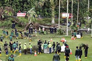 National Parks Board (NParks) and Singapore Civil Defence Force officers examining a 40m-tall tembusu tree at the Botanic Gardens which suddenly fell onto unsuspecting visitors yesterday at around 4.25pm, just 35 minutes before the start of a nearby