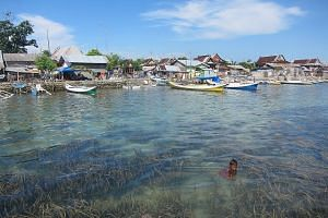 Seagrass meadows in front of a village in the Spermonde Archipelago in Indonesia. The plant can fight diseases, according to a recent study. However, nearly one-third of seagrass meadows have died since the 19th century.