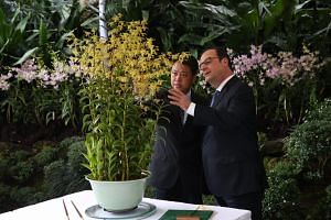 French President Francois Hollande (right) viewing the orchid Dendrobium François Hollande, which is named after him, with NParks CEO Kenneth Er at the National Orchid Garden, on Monday (March 27).