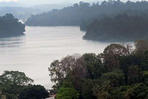 A Bangladeshi construction worker allegedly abducted a 39-year-old Chinese national along a trail at MacRitchie Reservoir and raped her.