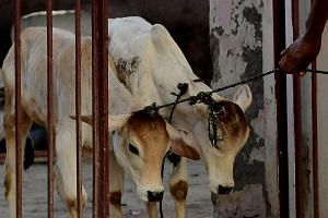 The southern Indian state of Kerala said it would challenge a federal ban against the sale of cows for slaughter.