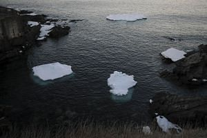 Small icebergs floating in Pouch Cove, in Pouch Cove, Newfoundland, Canada on April 25, 2017.