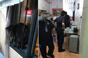 At his wits' end, Mr Harris Abu Bakar called the police for help to get a black cat out of his Punggol home.