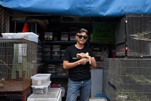 Mr Wasan Limsakul says two to three Singaporeans visit his shop every month to buy reptiles. Ball pythons are their favourite. He adds: