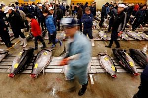 Wholesalers check the quality of fresh tuna displayed at the Tsukiji fish market before the New Year's auction in Tokyo, Japan on Jan 5, 2017.