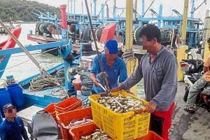 Workers unloading baskets of pufferfish at Teluk Bahang jetty.