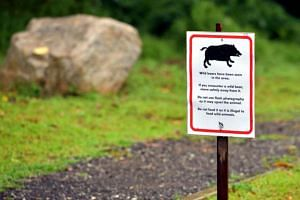 NParks has put up signboards warning people on what to do if they encounter a Wild boar at Windsor Nature Park, following a case of a woman who got injured by one.