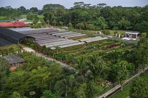 Koon Lee Nursery, which occupies a 2ha plot in Murai Farmway, is among the farms whose land will be acquired for the expansion of Tengah Air Base.The farms will be compensated based on market value for the land at the point of acquisition.