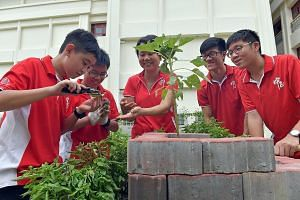 The butterfly garden is now central to Chung Cheng High School (Main)'s Biodiversity Enrichment Programme for Sec 1 students, which accepted its first intake this year. Under the programme, students create awareness about the diverse biodiversity in
