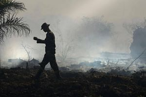 An Indonesian ranger inspecting the peat forest fire at Meulaboh, Aceh province, on July 26, 2017.