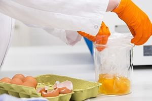 An NVWA laboratory assistant testing eggs after high levels of the insecticide fipronil were found in samples in the Netherlands.