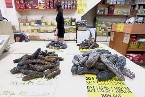 Dried sea cucumbers on display at a shop in Pudu, Kuala Lumpur.