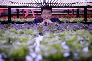 Mr Frank Phuan has also been growing his family's vertical farming business, Packet Greens, since 2014. What started out as a test bed for light technologies in growing crops indoors has since grown into a farm which sells over 50 varieties of pestic