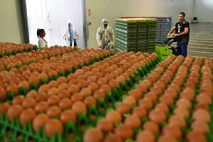 Chicken eggs are processed and packed at a facility in Romania, Aug 11, 2017.