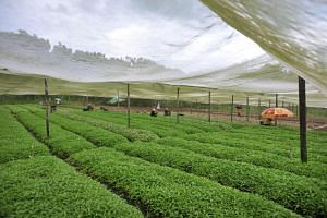 The last time land was tendered out for agricultural use was more than two decades ago.