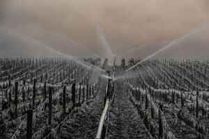 Water being sprayed on a Chablis vineyard to protect it against freeze in Chablis, northern France, on April 21, 2017.