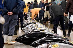 Fishmongers inspecting bluefin tuna at Tsukiji fish market in Tokyo on Jan 5, 2017.