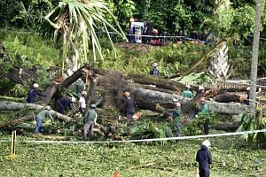 Indian national Radhika Angara was crushed by the 40m-tall heritage tree when it fell on Feb 11.