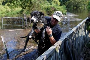 A dog being rescued in Rose City, Texas, on Thursday from floodwaters caused by Hurricane Harvey. In Beaumont, 118,000 people have been left without drinking water after floods disabled the system in a city surrounded by swollen rivers and bayous, cu