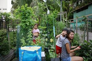 Ms Mabel Wee with her children, three-year-old Max and six-year-old Meranda Chee, at her community garden plot in Haig Road.