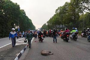 Pictures of the scene posted on Johor Baru traffic group Traffic Report JBS showed a dead boar on the road, and a large group of motorcyclists gathered around a man lying on the road.