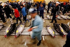 Wholesalers check the quality of fresh tuna displayed at the Tsukiji fish market before the New Year's auction in Tokyo, Japan on Jan 5, 2017.PHOTO: REUTERS