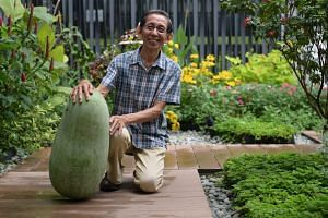 Mr Ivan Loh with his winning winter melon which weighs 25kg and was cultivated over 8 months.