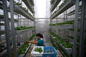 The Urban Redevelopment Authority is hoping to make a bigger push for commercial farms.
