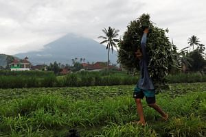 A farmer carries fresh crop from a field as Mount Agung volcano spews smoke and ash.