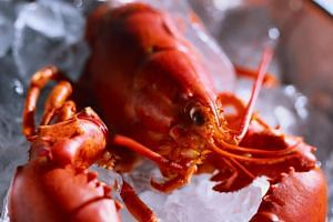 Switzerland has stipulated that live crustaceans, including the lobster, may no longer be transported on ice or in ice water.