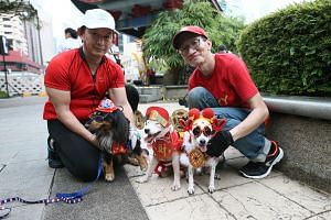 Matthew Koh, 50, with his dog Max and Donald Teo, 54, with his dog Jiji and Moo Moo. They will be participating in a special dog-themed carnival which will take place at Kreta Ayer Square on Feb 3.