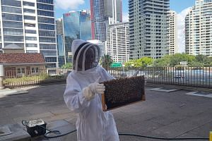 Beekeeping clubs have been opening and growing across Australia, partly to make honey and to encourage the survival of bees, which are under global threat from disease.