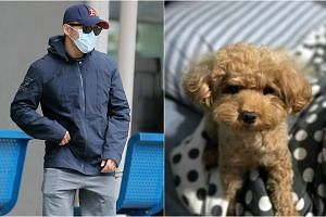 Gerald Kok Zhin Oi abused a toy poodle belonging to the brother of his then girlfriend for six months.
