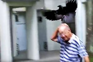 The Agri-Food and Veterinary Authority has received two reports of crow attacks in the vicinity of Block 205, Toa Payoh North, since Feb 5, 2018.