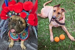 CNY-themed photos of dogs shared with The Straits Times on Instagram.