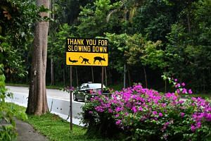 A sign asking drivers to slow down at Mandai Lake Road on March 12, 2018.