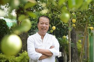 Madam Janny Cheong has two potted lemon plants in the balcony garden of her condominium. Mr James Koh of Hawaii Landscape, which has been selling lemon plants since the 1950s, says there has been an 80 per cent spike in the number of people buying le