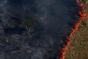 A forest deliberately set ablaze last August by the Brazilian Institute for the Environment and Renewable Natural Resources to combat illegal logging in Apui, in the southern region of Amazonas state.