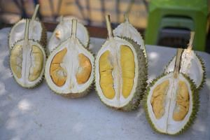 The Straits Times reported that prices of durian have fallen by as much as 40 per cent.