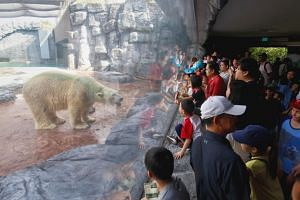 Visitors flocked to Inuka's enclosure at the Singapore Zoo on April 14, 2018, the first weekend after the zoo revealed that the 27-year-old polar bear could be put down if its health continues to decline.