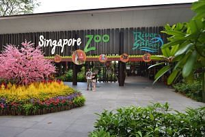 Wildlife Reserves Singapore, which runs the Singapore Zoo, said that the walk has been set up with careful consideration to minimise disturbance to the park's living collection and native wildlife.
