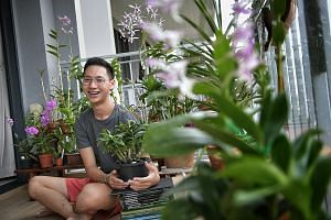 "The orchid collection of Mr Russell Tan (left, with the Dendrobium Cherry Song ""Bing Wei"") includes the Dendrobium Caesar (above) and a peloric form of a Dendrobium hybrid (far left)."