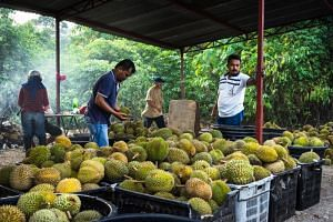 File photo showing durians at a roadside stall in Negeri Sembilan, Malaysia.