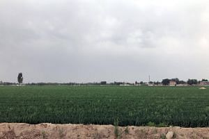 The Xiongan New Area, before its transformation into a world-class city, is a sleepy rural region with vast wheat fields, small cottage industries and a big freshwater lake.