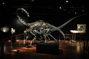 The skeletons of a Diplodocus (back) and an Allosaurus are displayed at the Drouot auction house in Paris, on April 6, 2018.