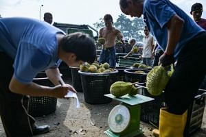 Workers divide and weigh durians at a farm in Karak, outside Kuala Lumpur in the nearby Pahang state, on July 24, 2018.