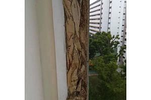 HDB said it was alerted to a video online showing old newspapers in the sidewalls of the balcony.